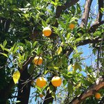 The orange grove.