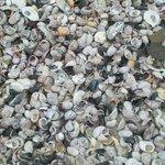 Walnt Beach