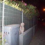 Very friendly doggy