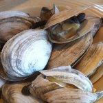 long neck clams