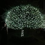 very impressed with the sparkly tree