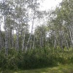 Good Spirit provincial park - lovely birchwood forests