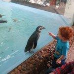 Será que dá pra pegar no pinguim mãe?