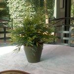 giardino coperto, particolare tavolo