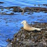 Sea Lion Pup--Lime Kiln State Park