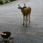 Gast beim Grillen vor der Hütte