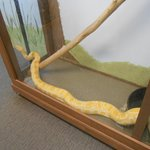 Several snake displays in the Reptile Room.