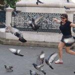 muuuitos pombos na Praça....