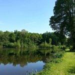 Vue sur le grand étang et du grand arbre en contrebas du restaurant