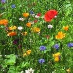 Flowers in the kitchen garden