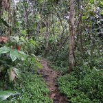 Reserva Biológica Indio Maíz
