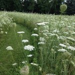 trails and Queen Anne's Lace
