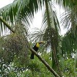 Tukan aufgenommen im Park des Hotels