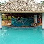 Pool and Toucan Tilly's bar