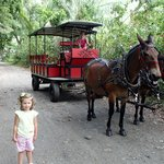 Our mule wagon with Tracie