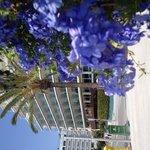 Summer/Sitges/Calipolis/nice