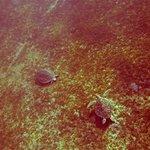Rencontres Meetic de tortues à Malendure