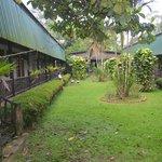 Inner courtyard/garden