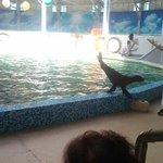 Yevpatoriya Dolphinarium