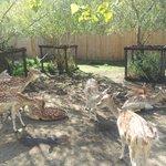 deer area
