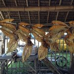 dried fish (labahita)