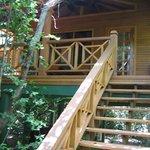 Treehouse 25