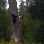 Black bear cub seen while fishing with Fisherman's Choice!