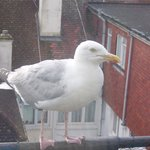One of the noisy seagulls!