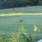 lots of deer