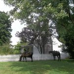 Horses at the Old House