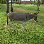 one of the hotel Donkeys!