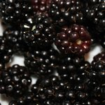 Fresh Blackberries from the Yard
