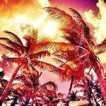 Ajijic Palms