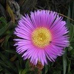 fiori Casa Schmidt