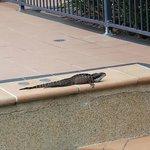 Steve the Resident Water Dragon