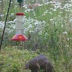 Hummmingbird feeder beside window
