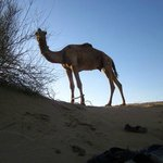 Real Desert Man Camel Safari - Day Tours