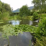 The pretty pond