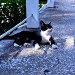 Stray kitty we named Jorje