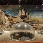 Meerkat Exhibit