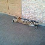 Uno dei due cuccioli di Tigre nella Nursery