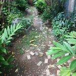 Herb garden behind old wing