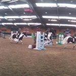 show jumping at Ingliston