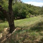 Foto de Dry Comal Creek Vineyards