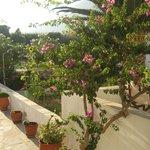 Μπαλκόνι - Κήπος