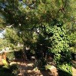 villa vittoria's garden
