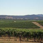 Beautiful views of rolling vineyards from Baileyana