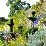 Topiary border