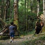 Bosque de Pumares