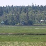 View of the Birdhouse (centre) from across the marsh.